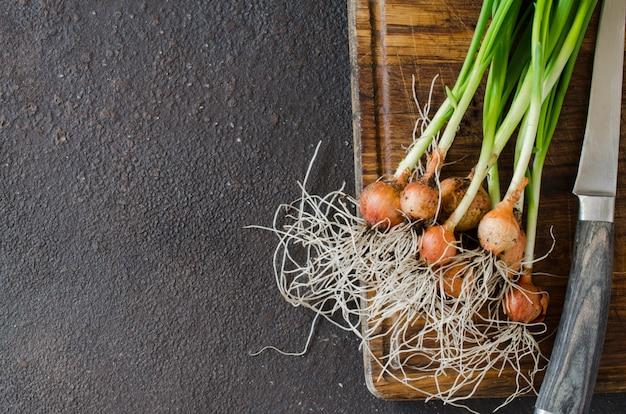 Recém colhidas cebolinhas orgânicas com raízes na tábua de madeira