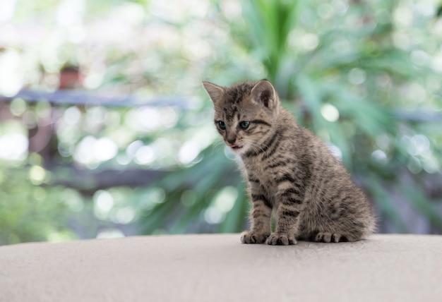 Recém-nascido gatinho gato potrait no palco