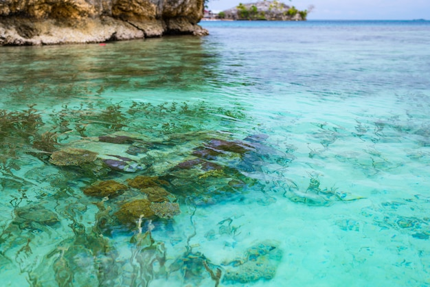 Recife de corais próximo acima na água transparente de turquesa do mar tropical.