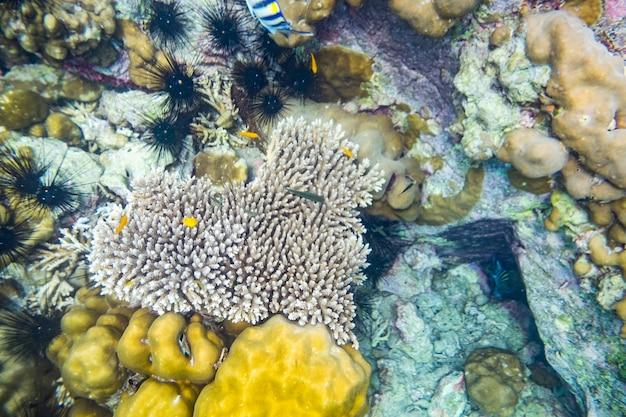 Recife de coral em forma de coração, muitos peixes pequenos