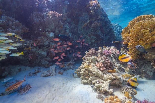 Recife de coral mar vermelho egito