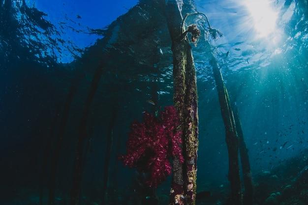 Recife de coral subaquático no caribe