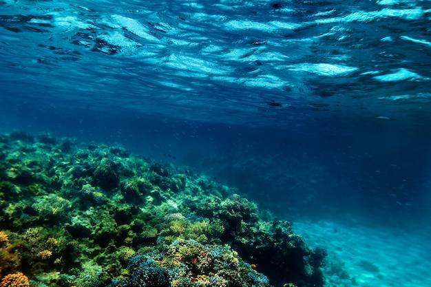 Recife de coral subaquático no mar vermelho