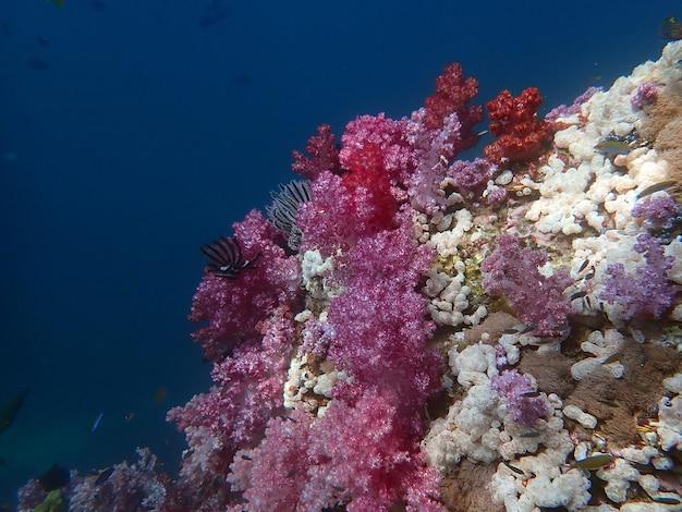 Recifes de corais coloridos com peixes na ilha de lipe, mar de andaman, oceano índico, tailândia, fotografia da natureza