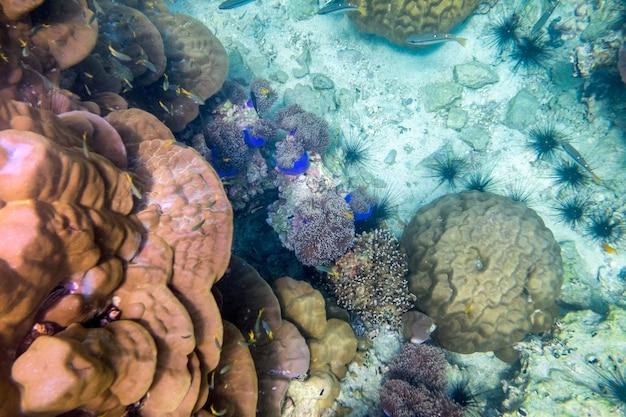 Recifes de corais coloridos subaquáticos e peixes no mar de andaman