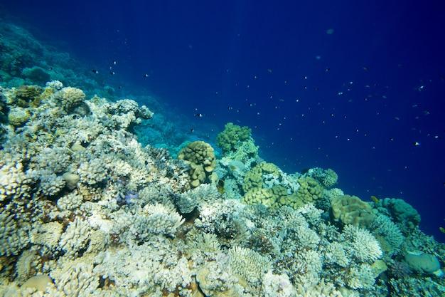 Recifes de coral subaquáticos