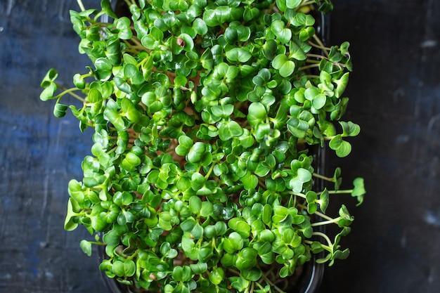 Recipiente de microgreens salada vegetariana crua comendo ervas de mostarda manjericão rabanete fresco vegano