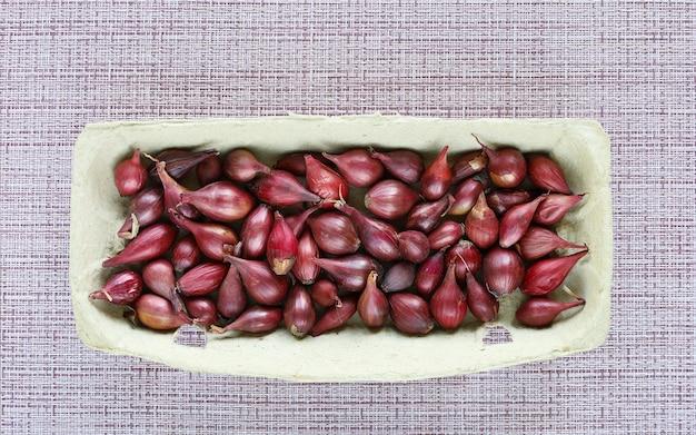 Recipiente ecológico com sementes de bulbos de cebola roxa para plantio e cultivo