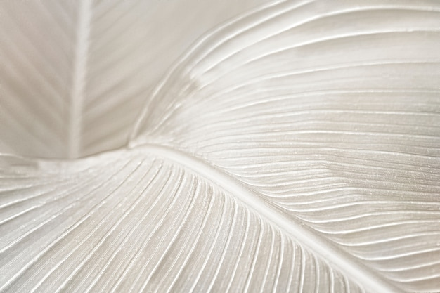 Recurso de design de fundo de folha de ave do paraíso cremoso