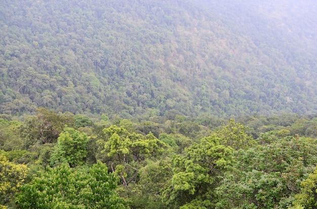 Recurso natural na floresta tropical, parque nacional de khao yai, tailândia