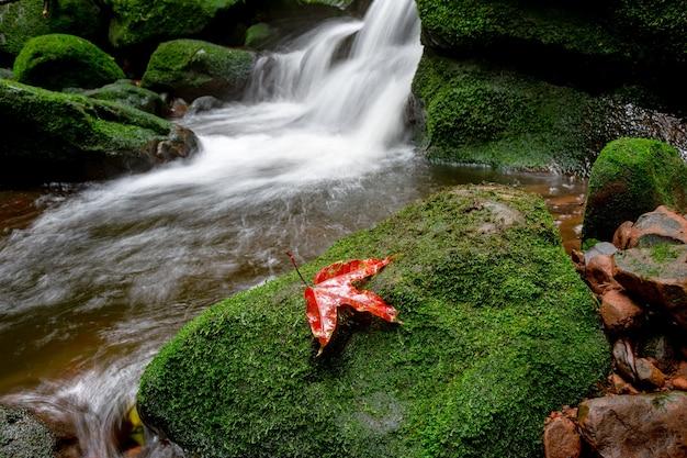 Red maple na rocha de cobertura verde musgo na cachoeira