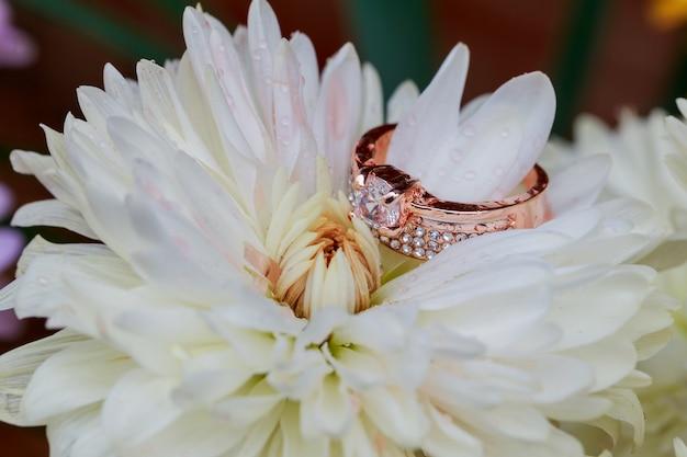Redding anéis no fundo de flores brancas