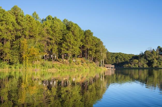 Reflexão, de, árvore pinho, em, um, lago, pang, ung, maehongson, tailandia