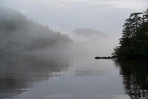 Reflexão, de, árvores, ligado, água, skeena-queen, charlotte, distrito regional, haida, gwaaii, graham, ilha,