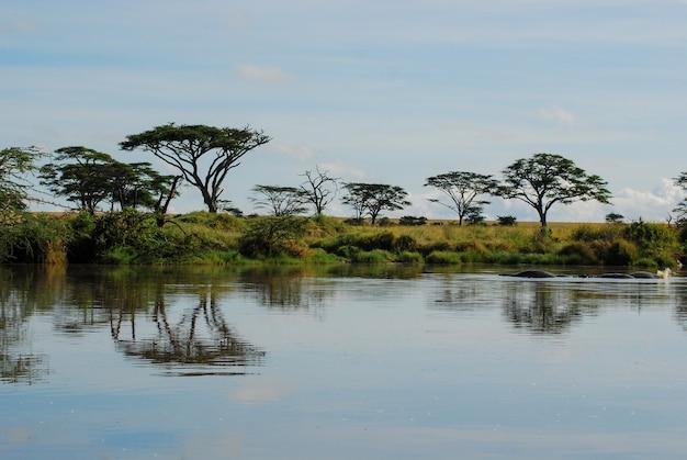 Reflexão de árvores na água