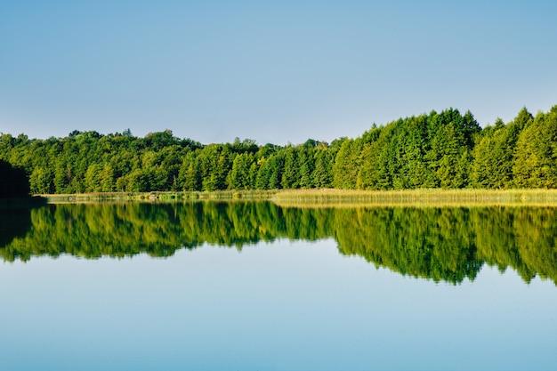 Reflexão de floresta na água do lago