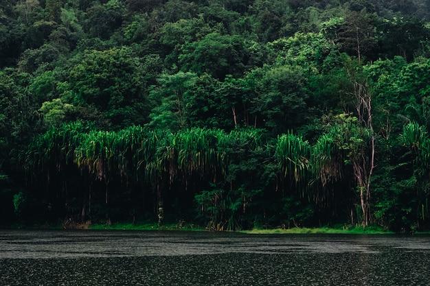 Reflexão verde bonita da floresta o lago grande na natureza.