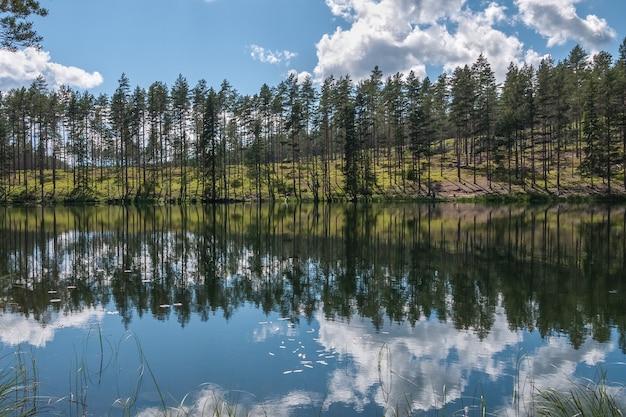 Reflexo do céu e da árvore em área isolada à beira do lago