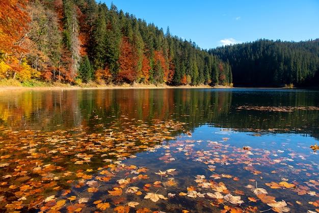 Reflexões perfeitas de árvores de outono no lago com folhas