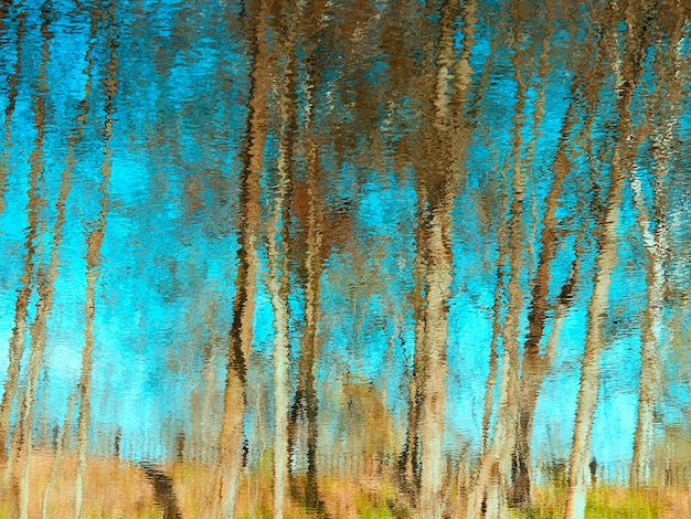 Reflexos dramáticos de água no fundo das árvores