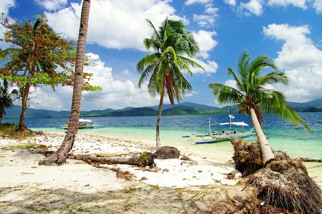 Refúgio tropical. palawan, el nido. salto de ilha. filipinas