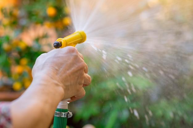 Rega jardim mulheres idosas mão segure spray de água a árvore no parque