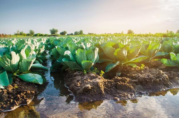 Rega natural de colheitas agrícolas, irrigação