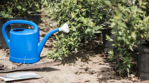 Regador azul perto de plantas que crescem em estufa