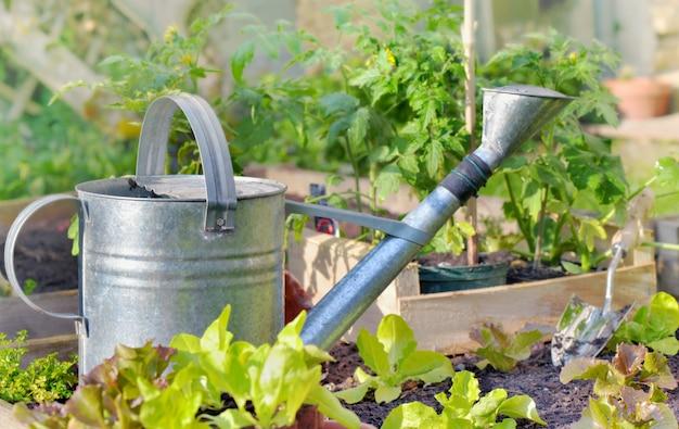 Regador de metal em uma horta