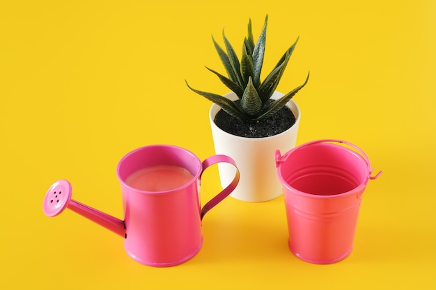 Regador e balde perto do vaso de flores com suculenta