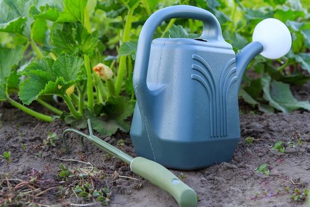 Regador e pequeno ancinho de jardim com arbusto de medula vegetal jovem crescendo no fundo. foco seletivo no regador
