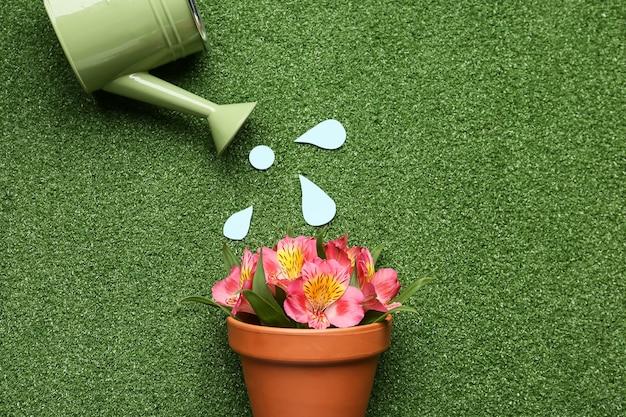 Regador e vaso com planta em flor na superfície colorida