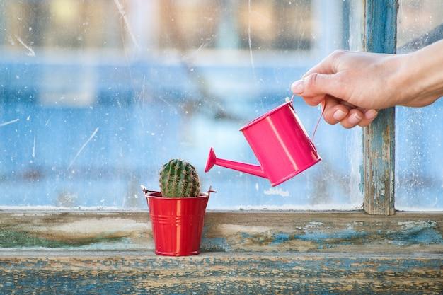 Regador rosa pequeno em uma mão feminina, molhando um cacto em uma janela antiga