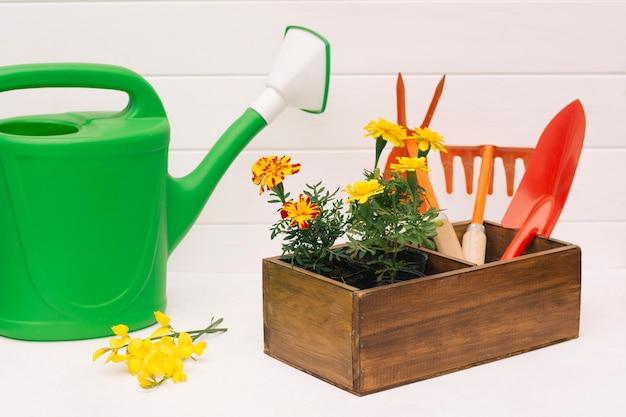 Regador verde perto de flores e equipamentos de jardim em caixa perto da parede