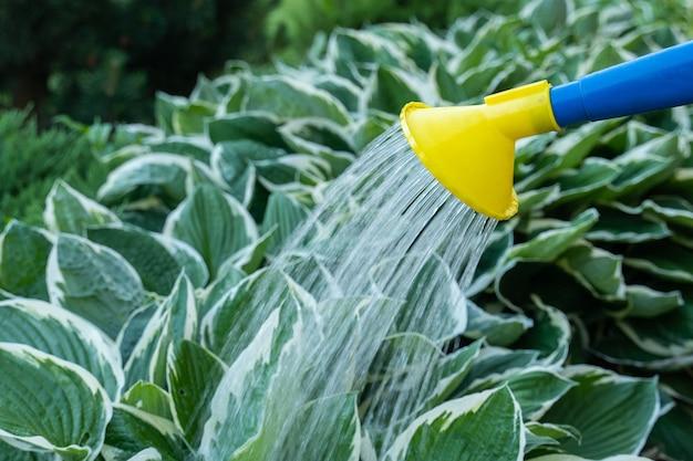 Regar as plantas do jardim com água de um regador