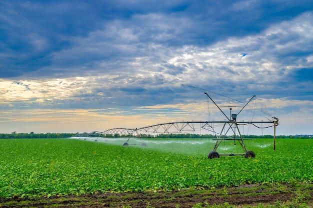 Regar beterrabas em um grande campo usando um sistema de sprinklers autopropelido com um giro central