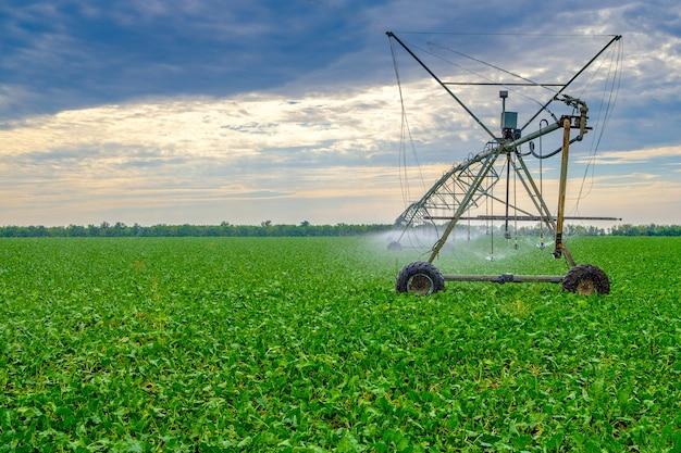 Regar beterrabas em um grande campo usando um sistema de sprinklers autopropelido com uma rotação central.