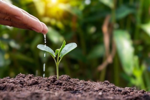 Regar manualmente as plantas cultivadas em solo de boa qualidade na natureza, plantando ideias e cuidando das plantas.