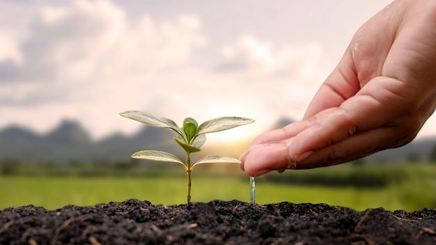 Regar manualmente as plantas plantadas no solo e no fundo da natureza com os raios de sol plantando idéias