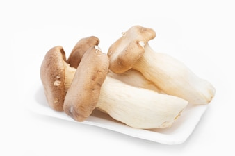Rei Oyster Mushroom no fundo branco.