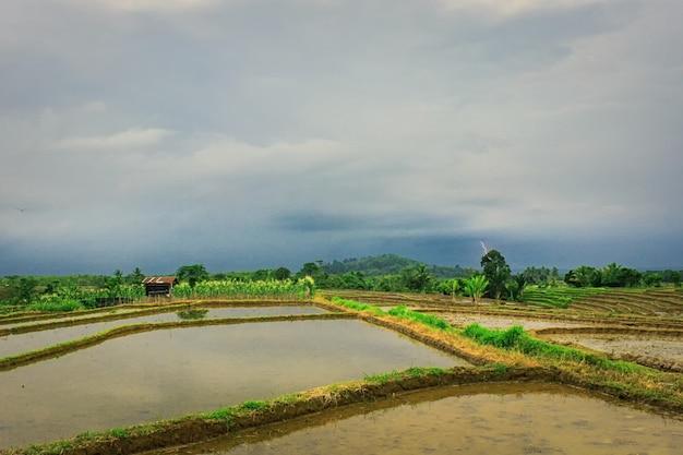 Relâmpago que está brilhando sobre os campos de arroz com uma atmosfera chuvosa nos campos de arroz