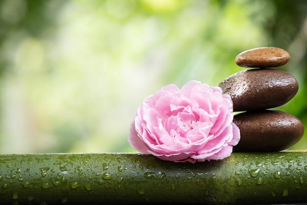 Relaxamento com flor rosa do damasco rosa na superfície da natureza do bokeh.