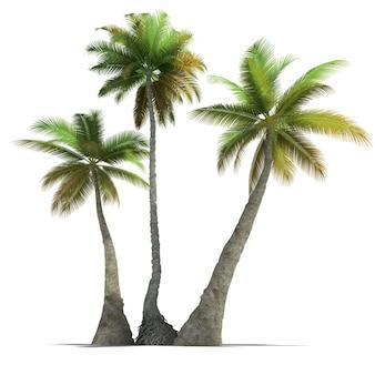 Renderização 3d de três palmeiras em um fundo branco neutro