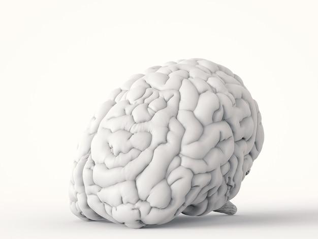 Renderização 3d do cérebro humano branco em fundo branco