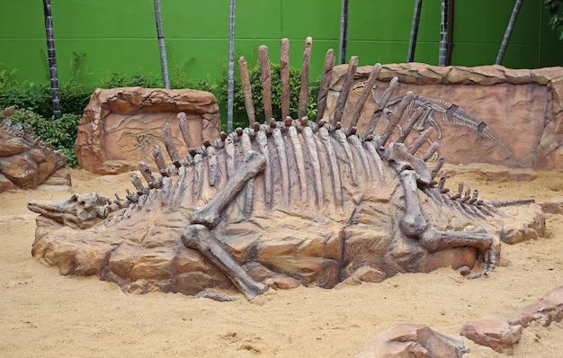 Réplica fóssil de dinossauro no chão de areia