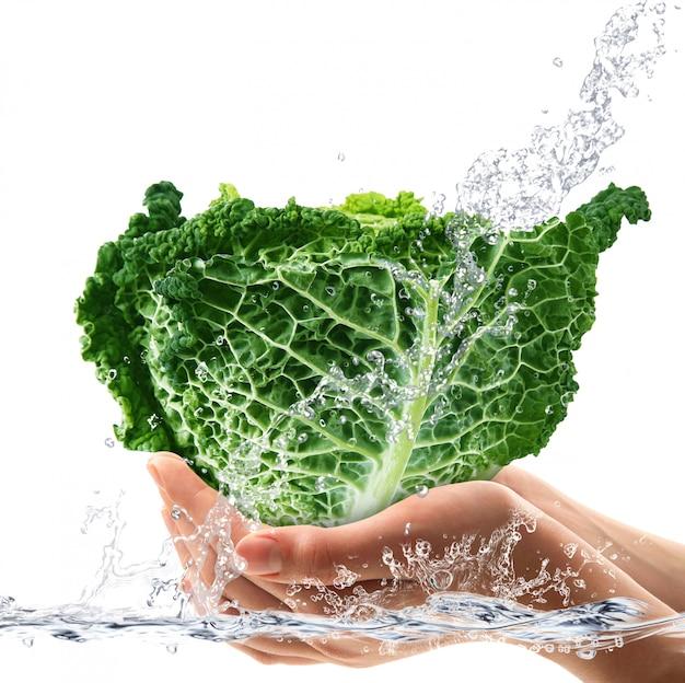 Repolho-savoy fresco caindo na água