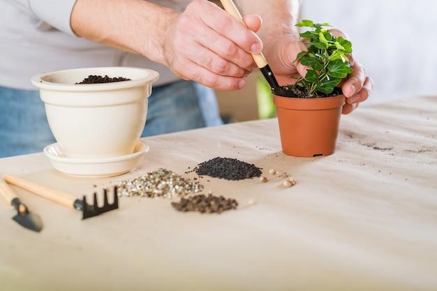 Repotting de plantas caseiras de primavera. cuidados com o jardim interno. homem envolvido em transplante de planta de casa.