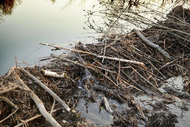 Represa de castor de galhos, troncos e lama - represa no rio da floresta