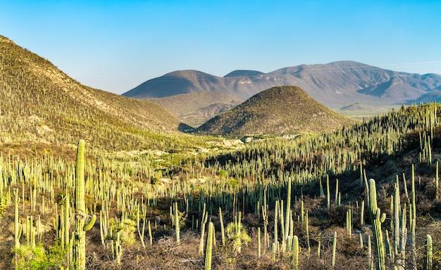 Reserva da biosfera tehuacan-cuicatlan. patrimônio mundial da unesco no méxico