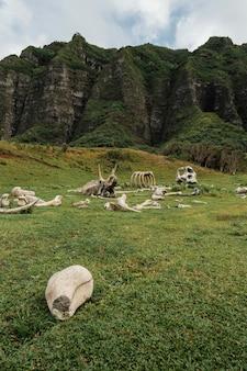 Restam ossos de dinossauro